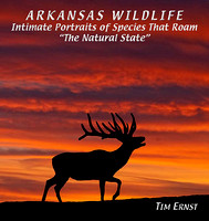 ARKANSAS WILDLIFE picture book gallery